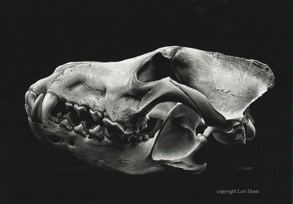 Canine Skull by Lori Dunn